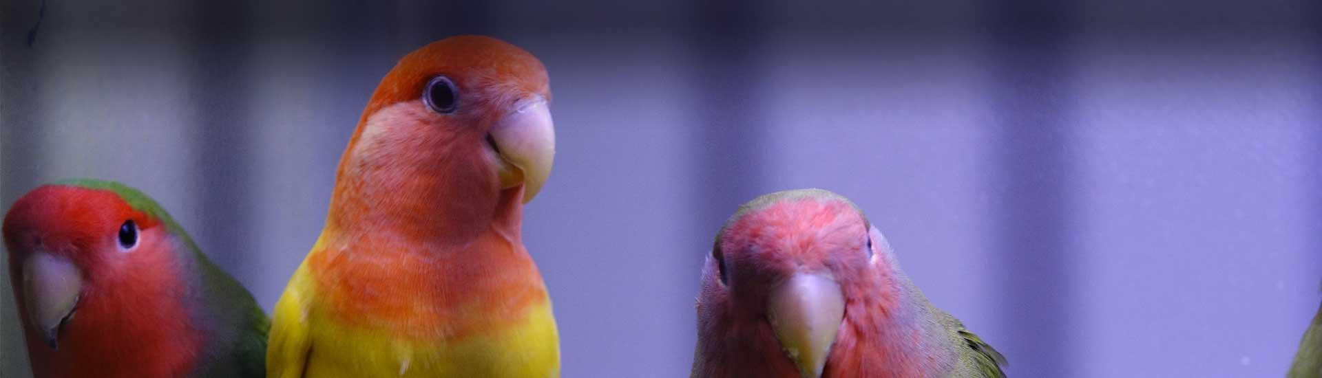 Vogels - Dier & Tuincenter Rommel